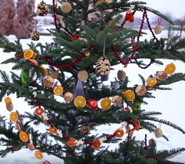 Birds On Christmas Tree: Recycled Christmas Tree Bird Feeder Attracts Birds For