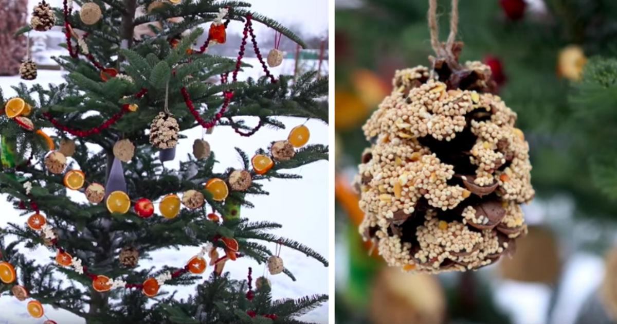 Recycled Christmas Tree Bird Feeder Attracts Birds For